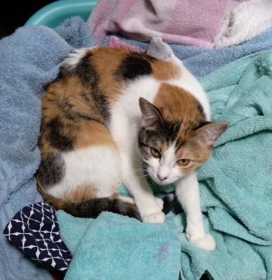 laundry-kitty