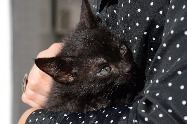 cat-1739237_640