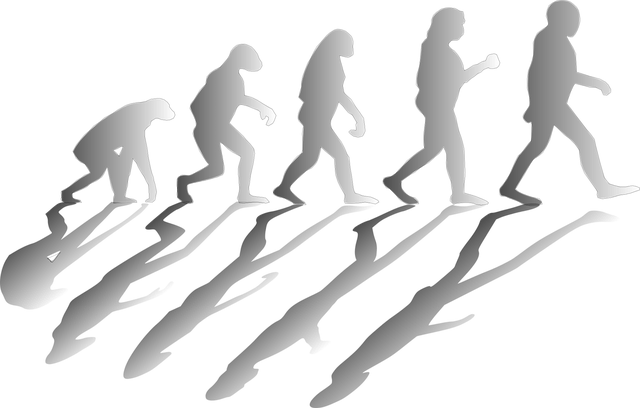 evolution-1295256_640.png