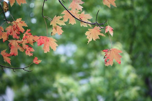 leaves-178669_640