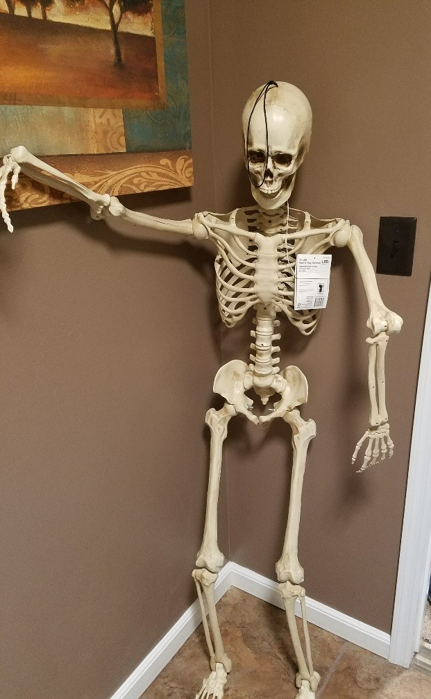 skeleton in bathroom