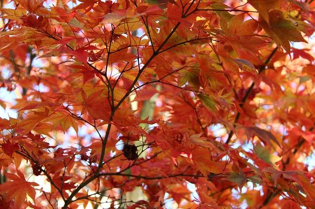 fall-2899372_640